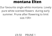 montana Elten Our favourite single white montana. Lovely  pure white scented flowers  during early  summer. Prune after flowering to limit size.15ft+    £9.50     PRUNE 1