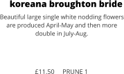 koreana broughton bride Beautiful large single white nodding flowers are produced April-May and then more double in July-Aug.    £11.50     PRUNE 1