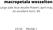 macropetala wesselton Large pale blue double flowers april-may. An excellent form. 8ft    £9.50     PRUNE 1