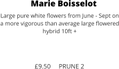 Marie Boisselot Large pure white flowers from June - Sept on a more vigorous than average large flowered hybrid 10ft +    £9.50     PRUNE 2