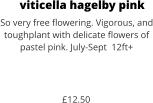 viticella hagelby pink So very free flowering. Vigorous, and toughplant with delicate flowers of pastel pink. July-Sept  12ft+    £12.50