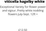 viticella hagelby white Exceptional Variety for flower power and vigour. Pretty white nodding flowers July-Sept. 12ft +    £12.50