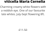 viticella Maria Cornelia Charming creamy white flowers with a reddish eye. One of our favourite late whites. July-Sept flowering 8ft.    £11.50