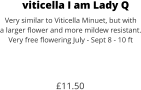 viticella I am Lady Q Very similar to Viticella Minuet, but with a larger flower and more mildew resistant. Very free flowering July - Sept 8 - 10 ft    £11.50