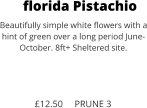 florida Pistachio Beautifully simple white flowers with a hint of green over a long period June- October. 8ft+ Sheltered site.    £12.50     PRUNE 3