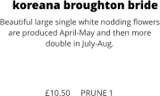 koreana broughton bride Beautiful large single white nodding flowers are produced April-May and then more double in July-Aug.    £10.50     PRUNE 1