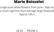Marie Boisselot Large pure white flowers from June - Sept on a more vigorous than average large flowered hybrid 10ft +    £8.95      PRUNE 2