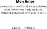 Mon Amor A very special new introduction, with deep violet flowers very freely produced. Different and a must have. June-Sept 6ft.    £12.50     PRUNE 3
