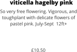viticella hagelby pink So very free flowering. Vigorous, and toughplant with delicate flowers of pastel pink. July-Sept  12ft+    £10.50