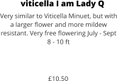 viticella I am Lady Q Very similar to Viticella Minuet, but with a larger flower and more mildew resistant. Very free flowering July - Sept 8 - 10 ft    £10.50