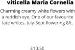 viticella Maria Cornelia Charming creamy white flowers with a reddish eye. One of our favourite late whites. July-Sept flowering 8ft.    £10.50