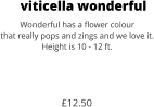 viticella wonderful Wonderful has a flower colour that really pops and zings and we love it. Height is 10 - 12 ft.    £12.50