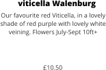 viticella Walenburg Our favourite red Viticella, in a lovely shade of red purple with lovely white veining. Flowers July-Sept 10ft+    £10.50